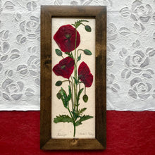 pressed flanders poppy framed artwork with walnut frame