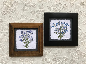 Dried Flowers; real pressed blue forget me not framed artwork available in black and walnut frame