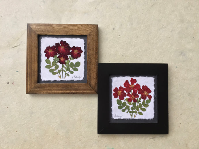 Dried Flowers; pressed rose framed picture