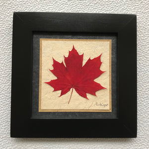 Dried Maple Leaf; framed pressed red maple leaf with black frame