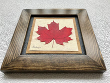 pressed maple leaf framed artwork with walnut frame