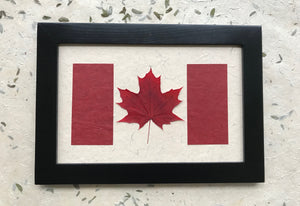 pressed sugar maple leaf in canadian flag design. made with handmade paper and black frame