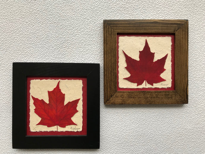 Dried Maple Leaf; pressed maple leaf framed artwork with black and walnut frame