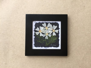 Dried Flowers; pressed musk mallow framed art in black frame; handcrafted in canada