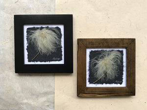 Dried Botanical; Pressed Old Man's Whiskers framed artwork available in black and walnut frame