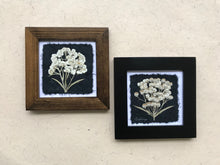 dried flowers; pressed pearly everlasting framed artwork with black and walnut frame