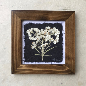 Dried Pearly Everlasting; pressed pearly everlasting framed botanical artwork