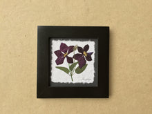 Dried Flowers; pressed clematis flower on handmade paper in black frame