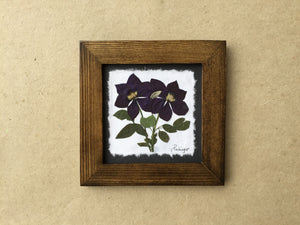 pressed clematis flower on handmade paper framed in walnut frame