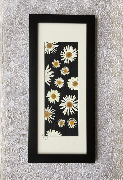 pressed Shasta daisy framed art_black frame