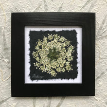 dried flowers; pressed queen annes lace framed artwork with black frame. black and white collection