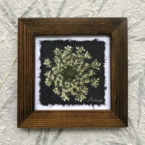 dried Queen Annes lace; pressed queen annes lace framed artwork with walnut frame
