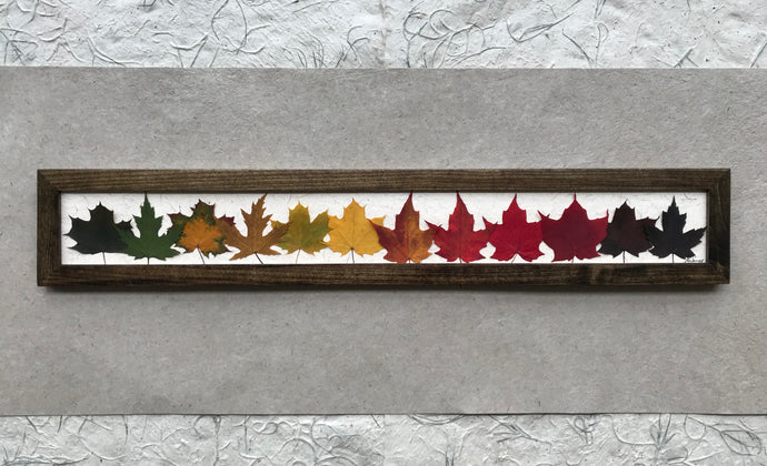 THE SKINNY Rainbow Maple; Pressed maple leaf framed artwork with walnut frame