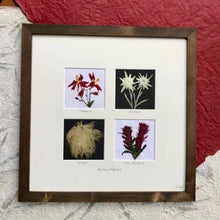 Real Mountain Wildflower Home Decor - Edelweiss, Columbine, Indian Paintbrush, Anemone by Pressed Wishes