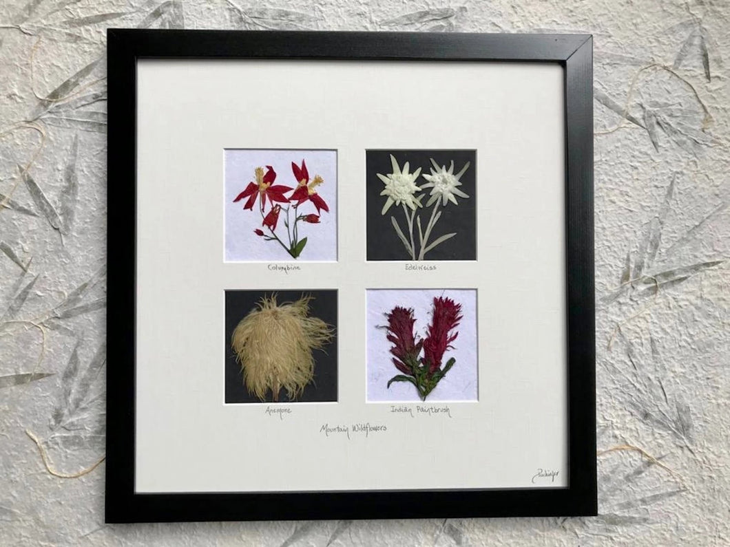 Real Pressed Red Mountain Wildflower Framed Artwork by Pressed Wishes