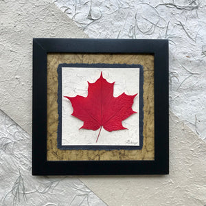 real pressed maple leaf framed artwork made in Canada