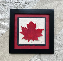 A single pressed maple leaf with red handmade paper and a black handcrafted frame