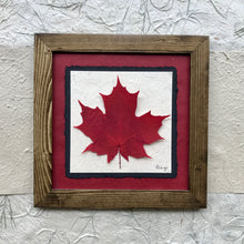 real pressed maple leaf framed artwork with red handmade paper and a walnut frame