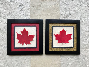 Dried Maple Leaves. pressed single maple leaf with red and green paper and black frame