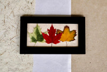 pressed maple leaf framed artwork for cottage or home decor