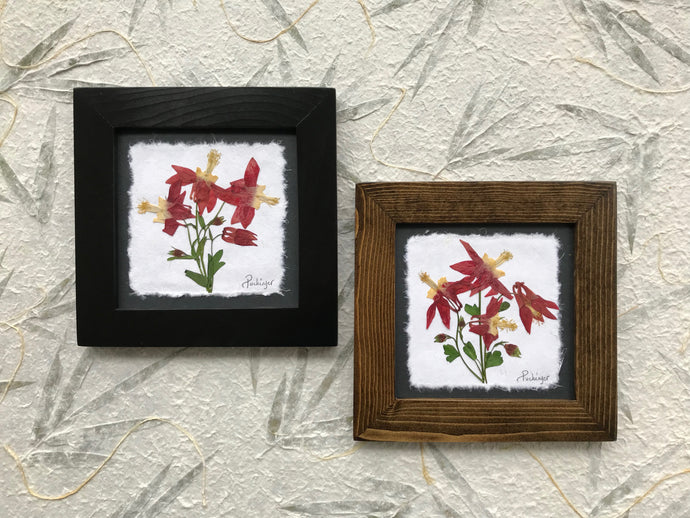 Dried columbine; real pressed red wild columbine framed botanical art. Available in black and walnut frame