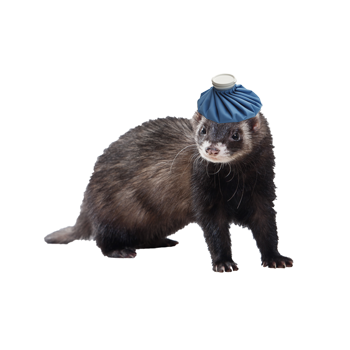 Five FUN facts about flu - SPOILER ALERT: Ferrets!