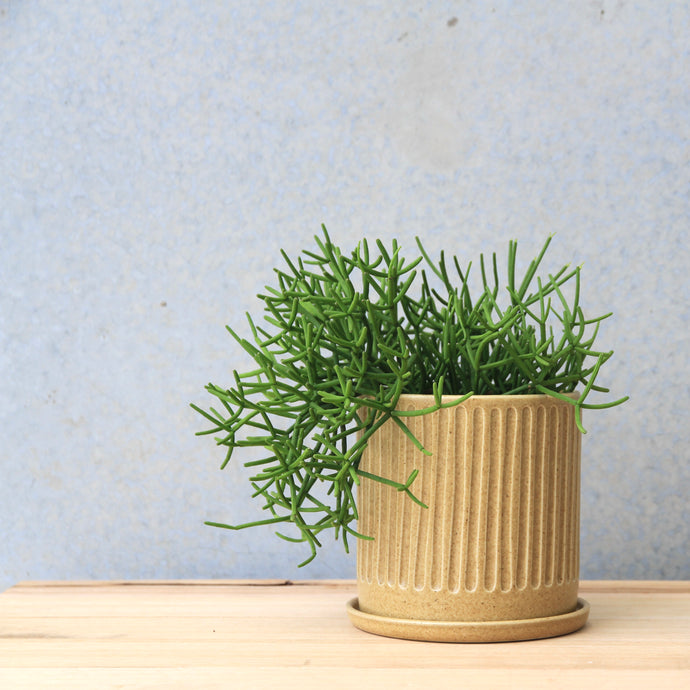 Fluted Planter Wheat