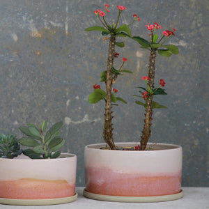 Pink Sunsets Planter