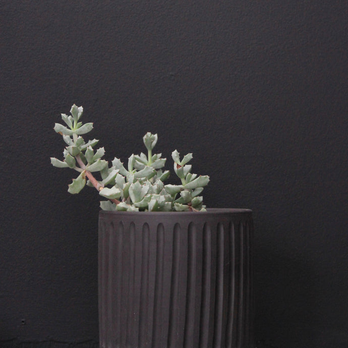 Noir Planter- carved
