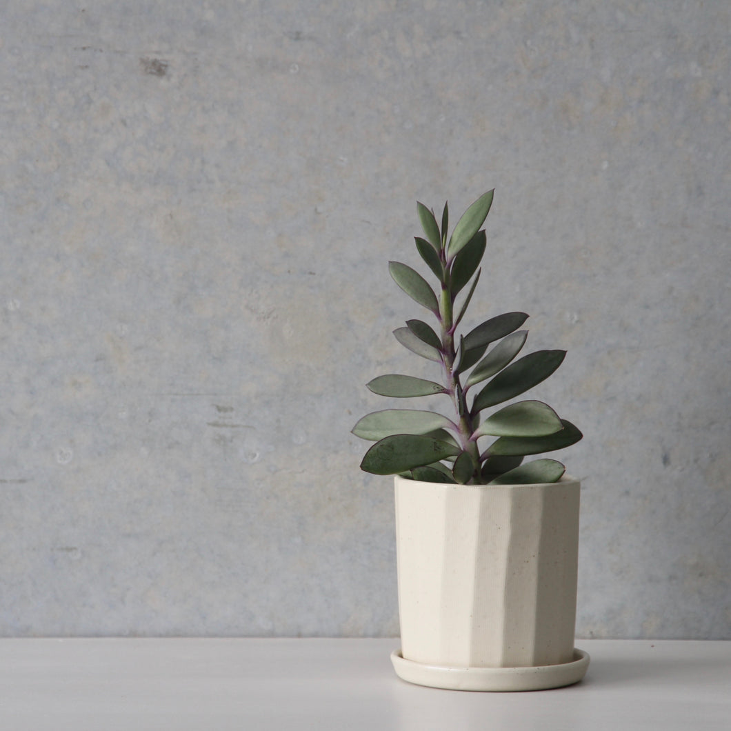 Faceted Planter Sage/Wheat/White