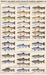 Fish Prints and Posters