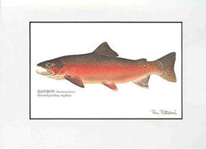 Matted Art Prints, Fish (Various Species)