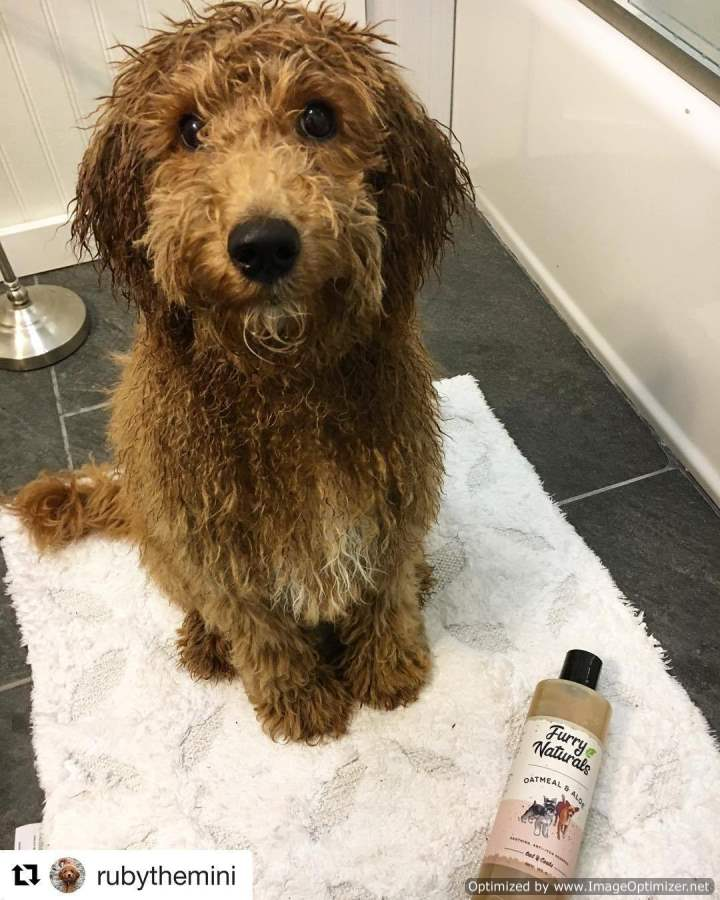 Oatmeal & Aloe Dog Shampoo 16oz - Furry Naturals