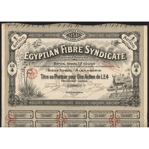 Egyptian Fibre Syndicate Societe Anonyme 1920 Egypt Stock Certificate