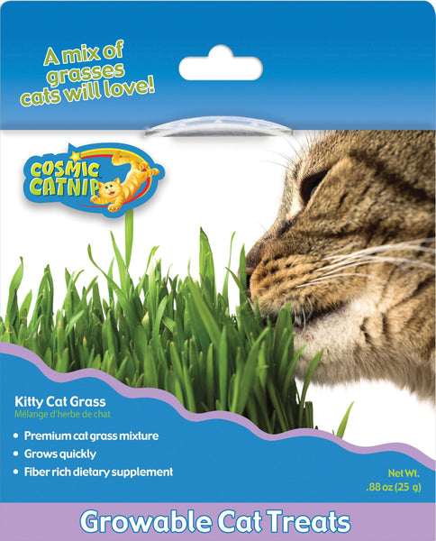 Cosmic Catnip Kitty Cat Grass
