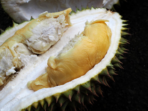 The Neglected Durian Seed Durians Com