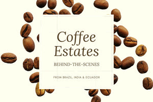 Behind-the-Scenes of Coffee Estates
