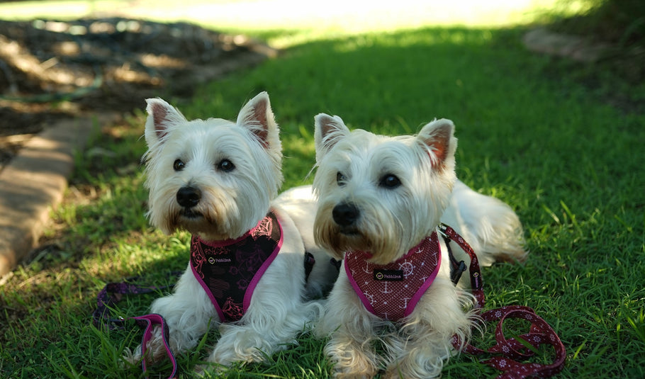 7 Reasons dogs love Pebblina reversible dog harnesses