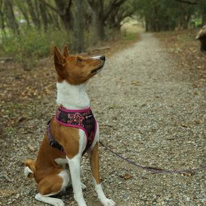 Sailor Owl Reversible Dog Harness - Pebblina