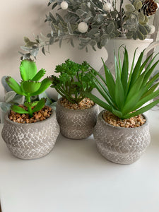 Potted Succulents (3 designs)