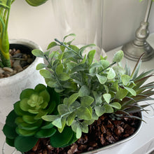 Mixed Succulent Arrangement In white Pot