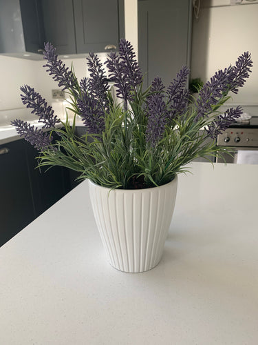 Potted Purple Lavender