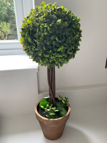 Potted Boxwood Ball 40cm