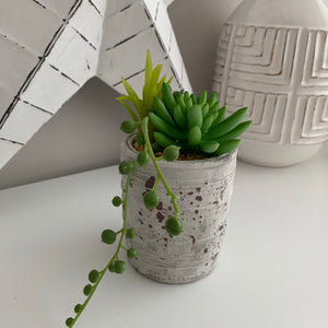 Mixed Succulents in distressed Pot