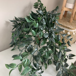 Trailing plants (Various)