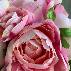 Potted Pink Eternity Rose