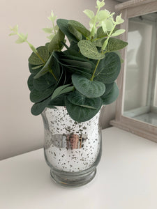Eucalyptus in speckled pot