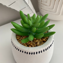 Succulent in black & white Pot