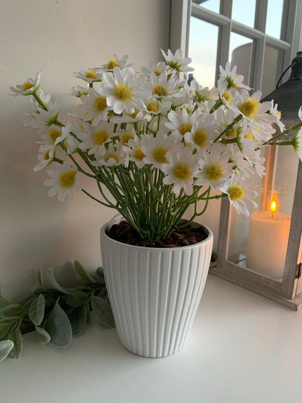 Potted White Summer Daisies