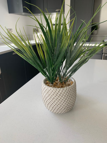 Grass Spray in ceramic pot